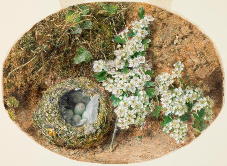 Birds nest and Hawthorn William Henry Hunt